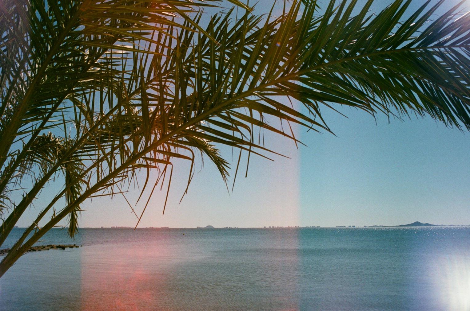 Los Alcazares palm by the beach