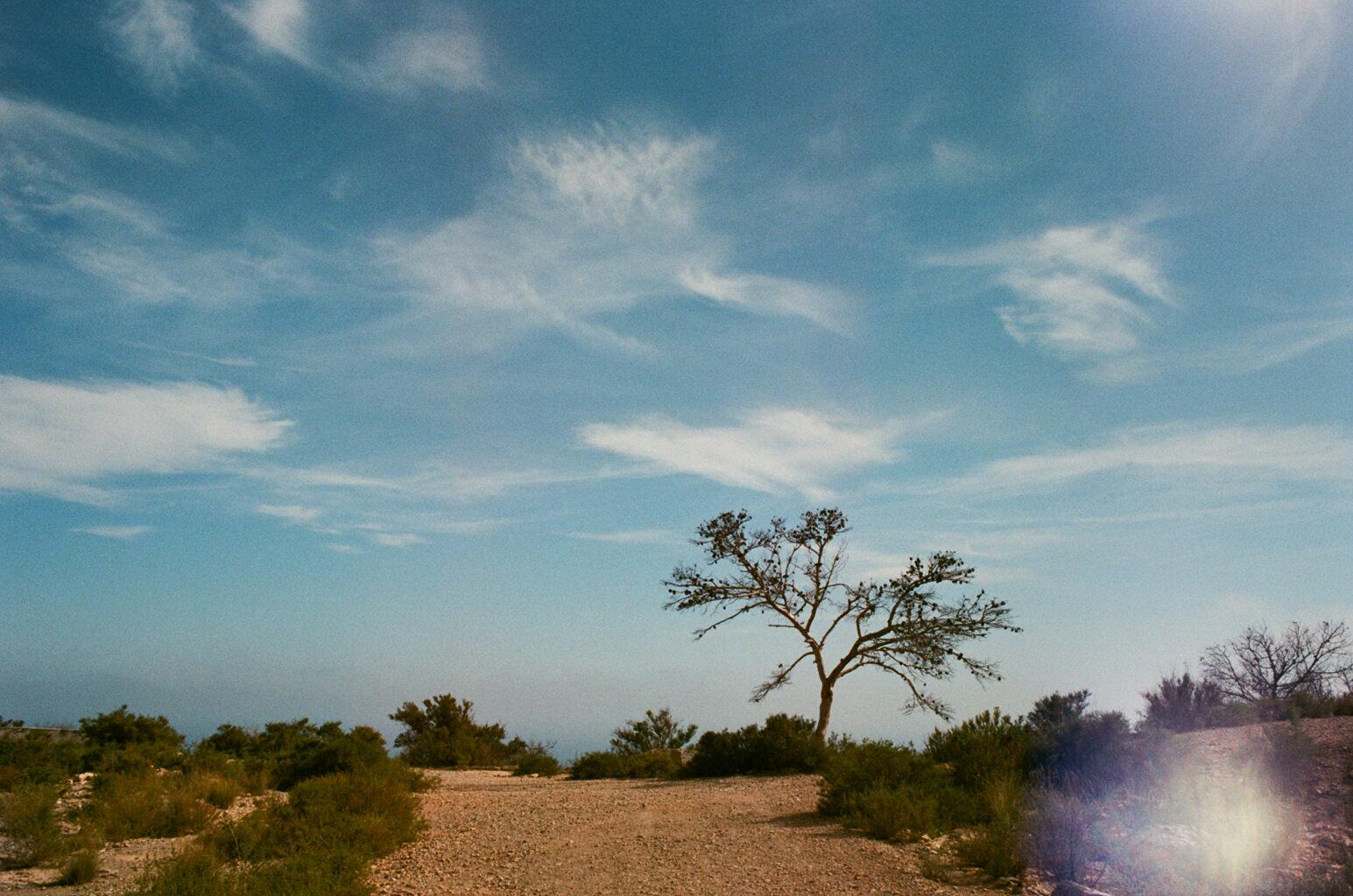 Los Alcazares tree on the cliff