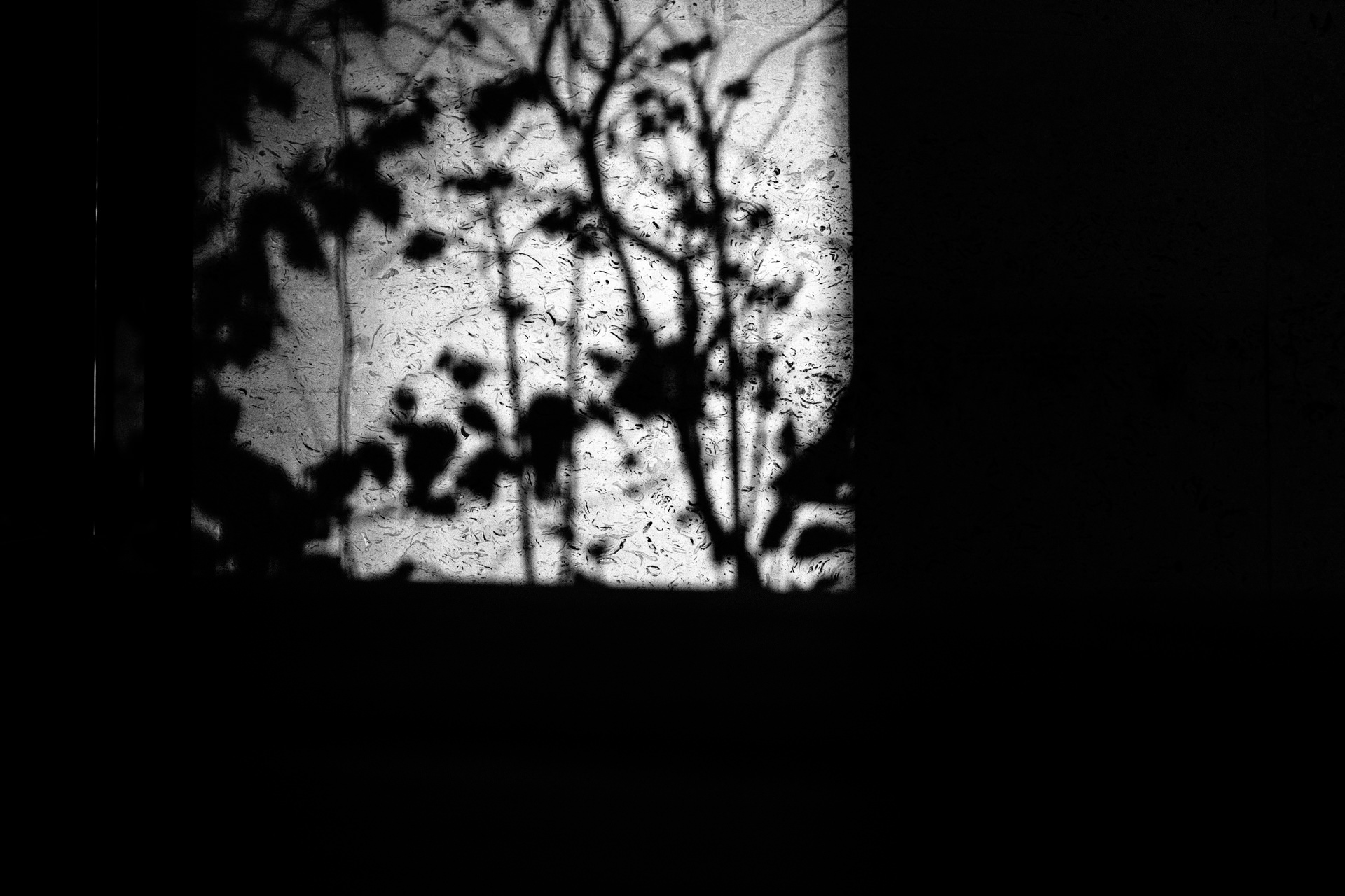 shadows of plant on the wall